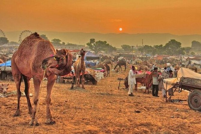 Colorful Rajasthan Tour 15 Nights / 16 Days Taxi or Cab Package Fare