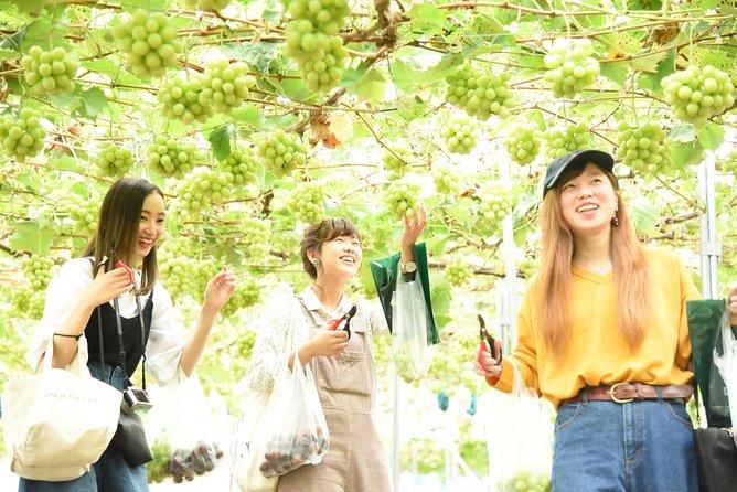 Enjoy Seasonal Fruit Picking at a Japanese Farm in Hiroshima