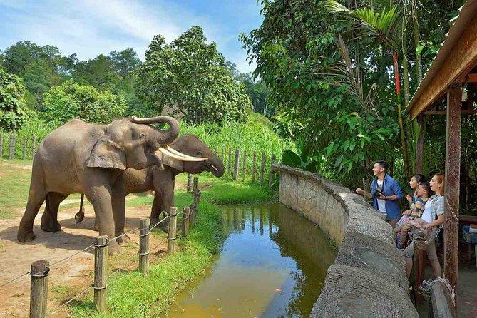 Lok Kawi Wildlife Park Tour From Kota Kinabalu