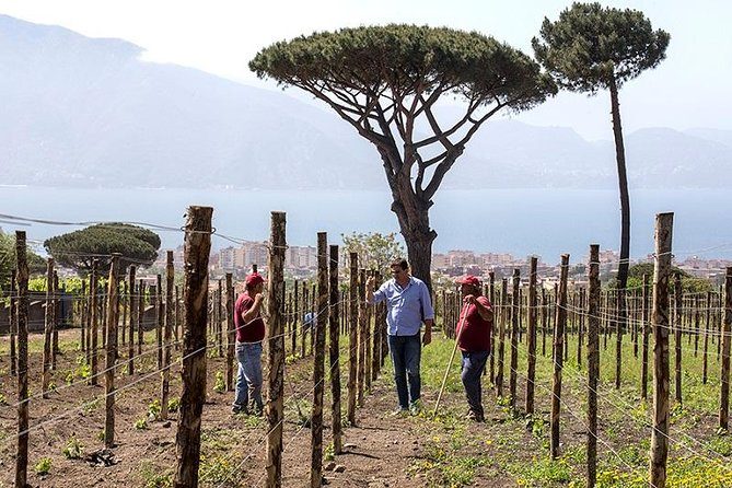 Organic Wine Tasting & Lunch on Vesuvius with Transfer from Sorrento Peninsula