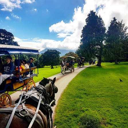 Jaunting Car Tour to Ross Castle from Killarney photo 8