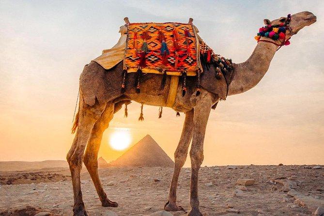 Cairo tour / Full day tour to Giza Pyramids, Egyptian Museum & Bazaar