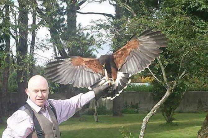 Hawk Walk with lunch