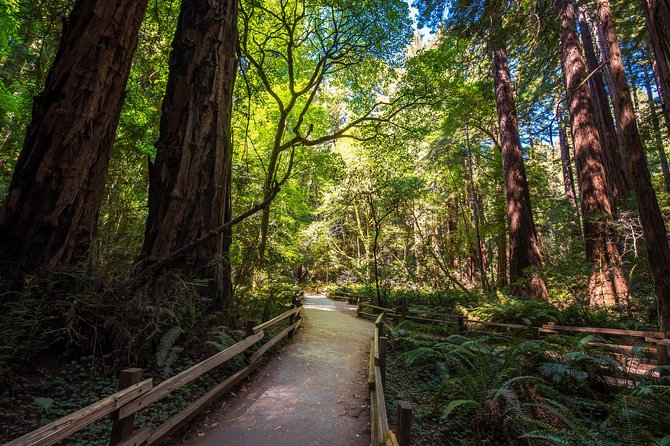 The Ultimate Day in the Bay Including Muir Woods