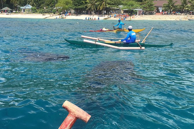 Whaleharks Interaction and Sardines Hunting in Pescador Island from Cebu City