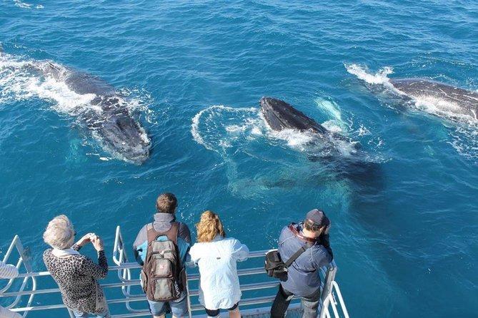 Whale Watching Excursion - Excursion Observation Des Baleines