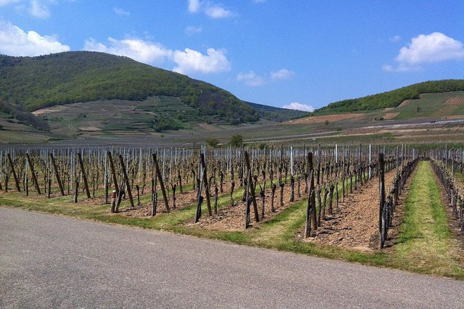 Private excursion: the best of Alsace in one day !