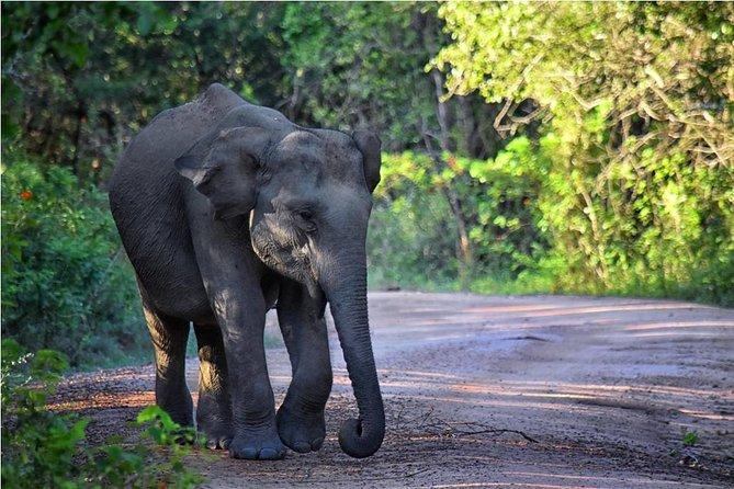 Full Day Luxury Private Jeep Safari at Yala National Park Sri Lanka