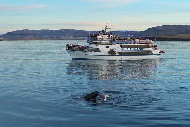 Icelandic Horse Riding and Whale Watching Tour from Reykjavik