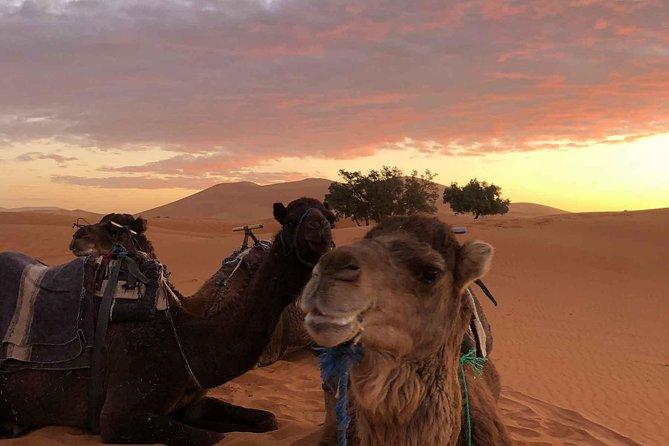 Tours from Marrakech to Fes 3 days through Merzouga sahara desert and palm grove