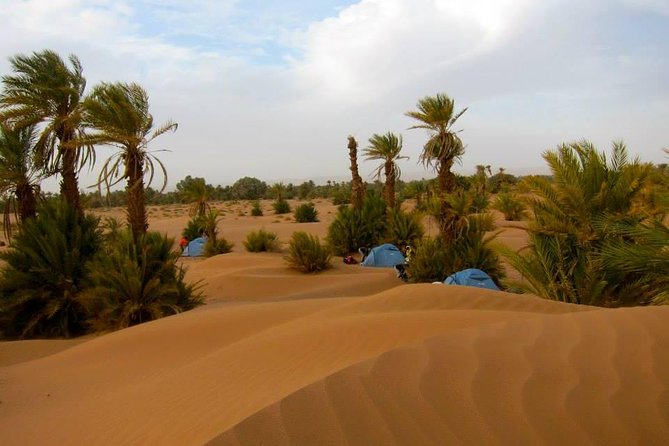Desert tour from marrakech to Zagora and Draa valley palm grove