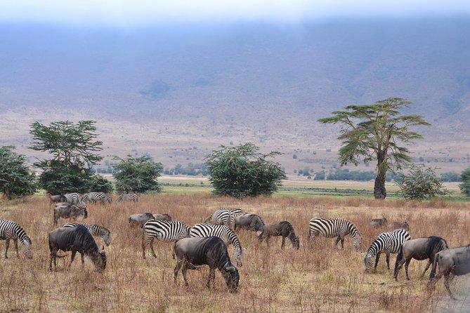 2 Days, 1 Night - Lake Manyara & Ngorongoro Crater