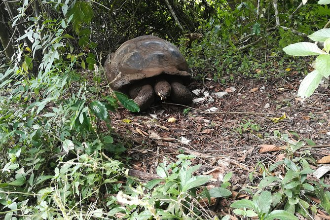 Skip the Line:El Chato 2 Reserve Admission Ticket in Santa Cruz Island,Galapagos photo 2