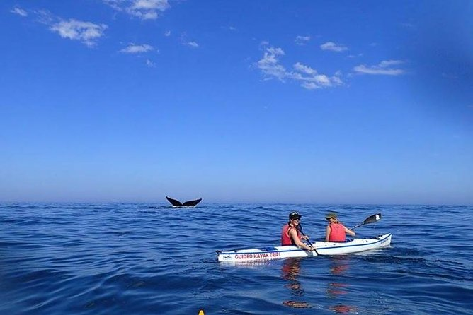 VIP Whale/Bear Watching, Sea Kayaking, Private Car 2 Day Tour
