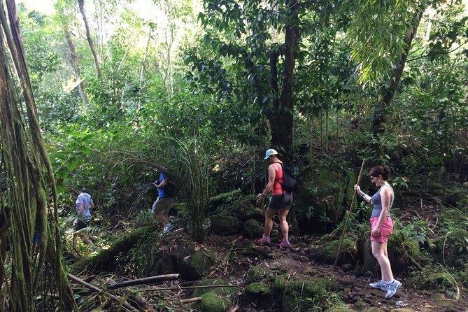 Hawaiian Waterfall Hike