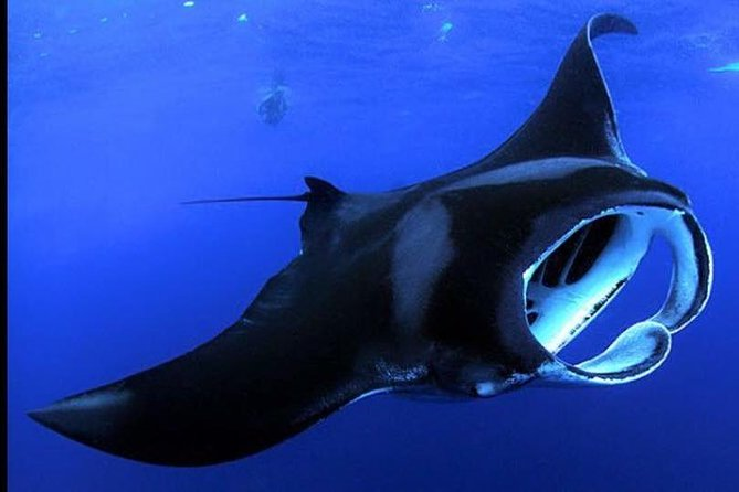 Night Manta Ray Adventure -Guaranteed!