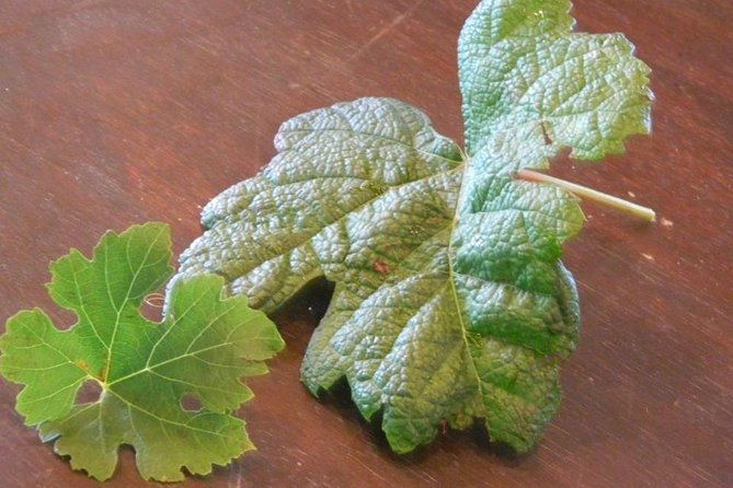 Different grape leaves