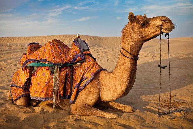 Private Transfers Jaisalmer To Bikaner Drop