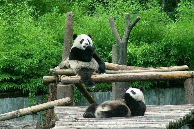 Private Transfer between Shanghai Zoo and City Hotels