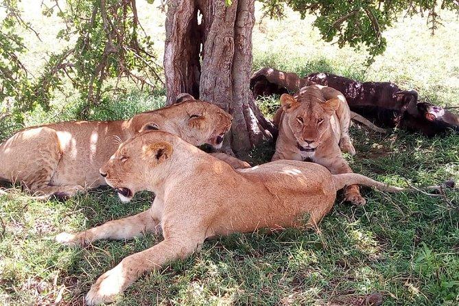 3 days Maasai Mara safari from Nairobi