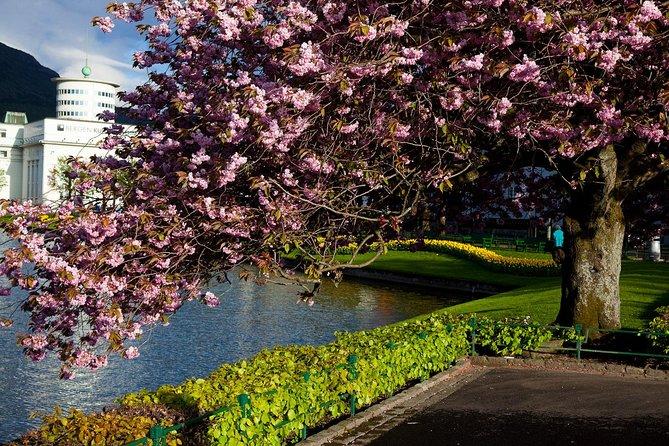 Bergen blooms