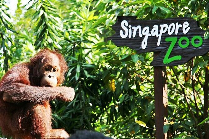 Singapore Zoo Entrance Including Private Transfer