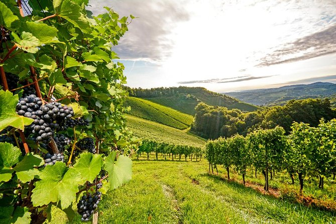 Beautiful vineyards in the rolling hills of the Willamette Valley