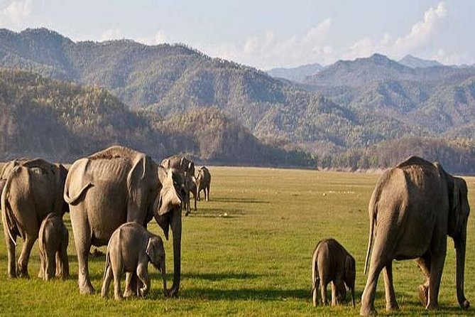 Private Transfer: Delhi to Corbett National Park with Brunch