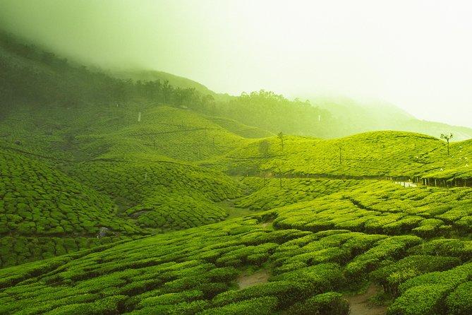 Private Luxury Romantic Tour to Munnar Hill Station & Tea Estates