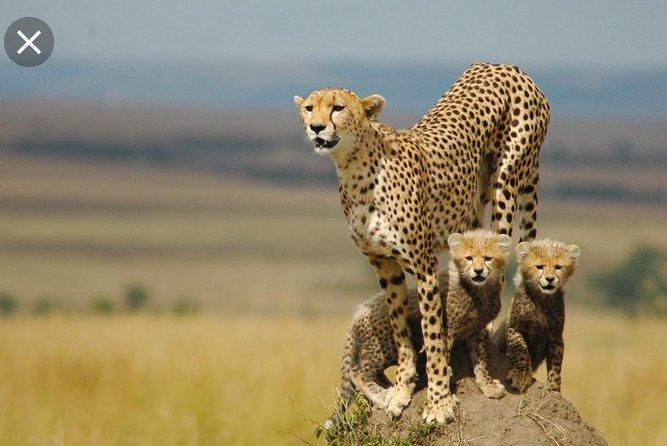 De Wildt Cheetah and Wildlife Centre Private Safari (Private)