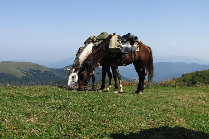 Horse trip in Svaneti with a local guide