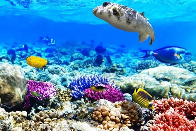 Diving &Snorkeling Boat Trip To Tiran Island and Ras Mohamed Sharm El Sheikh All Day Excursion