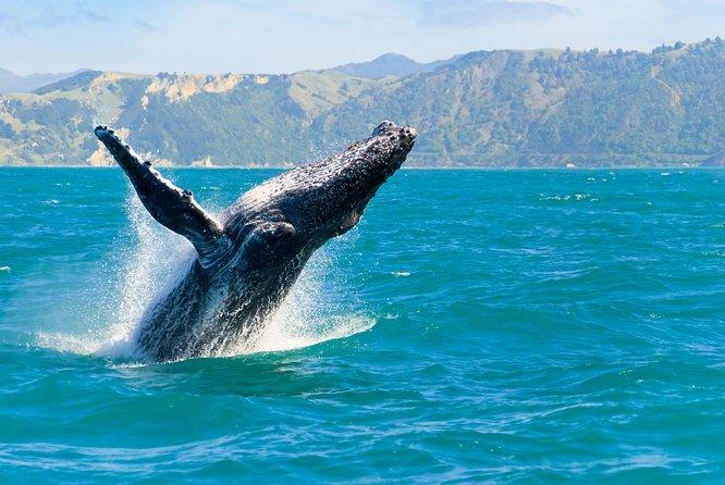 Oahu Whale Watching Cruise