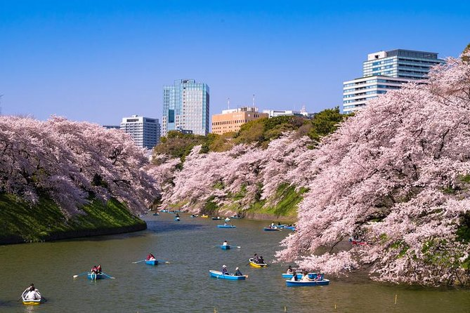 Cherry Blossoms: Tokyo Full Day with Buffet Lunch