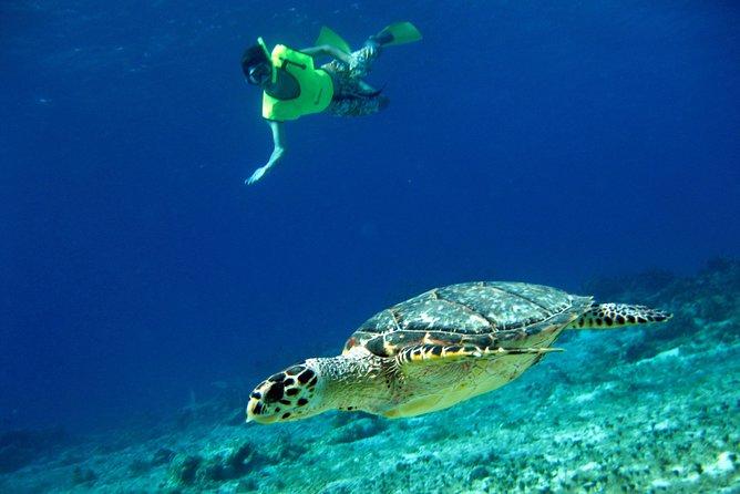 Mexican Flavors plus Snorkeling Tour