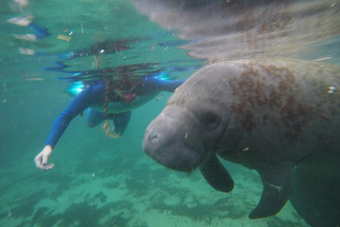 Private Manatee Snorkeling Tour