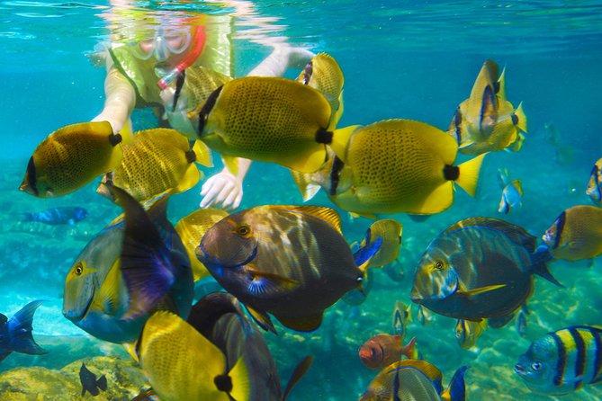Krabi Nice Sea Snorkeling
