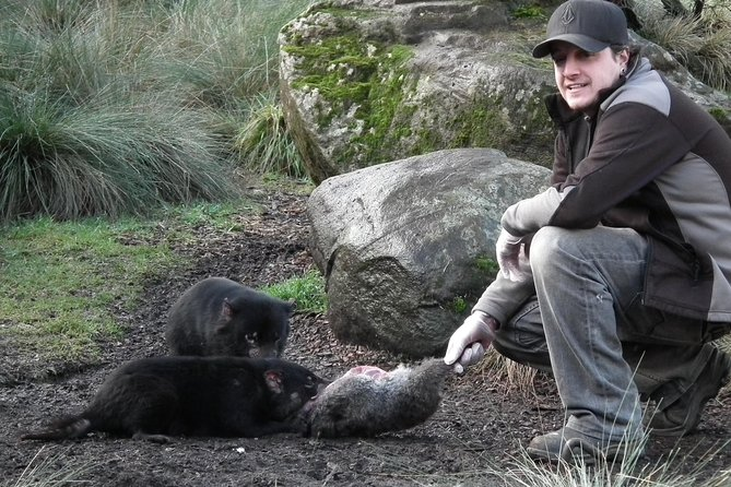 After Dark Tasmanian Devil Feeding Tour at Cradle Mountain