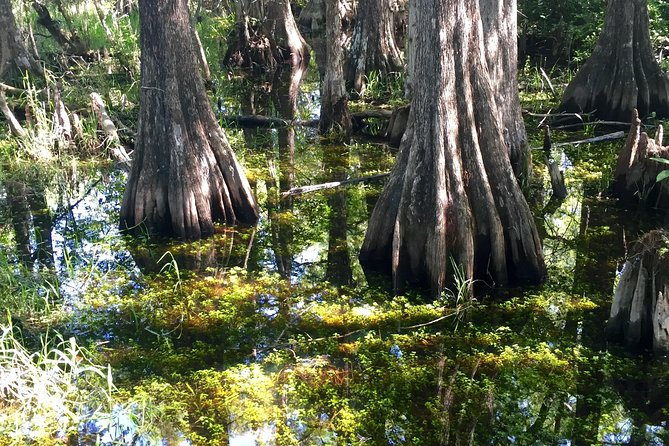 Full day Everglades, Big Cypress and 10,000 Islands, Airboat and Boat Ride