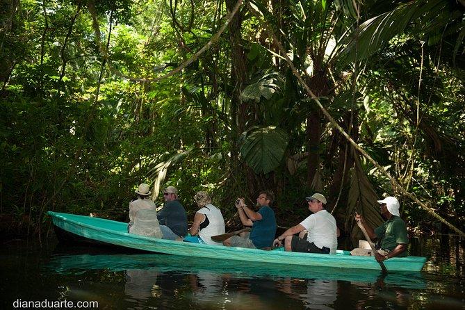 Kanutour im Tortuguero National Park