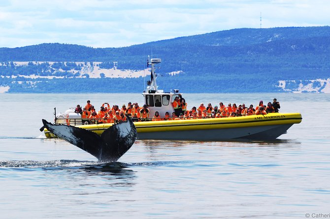 Full-Day Whale Watching Cruise from Quebec City