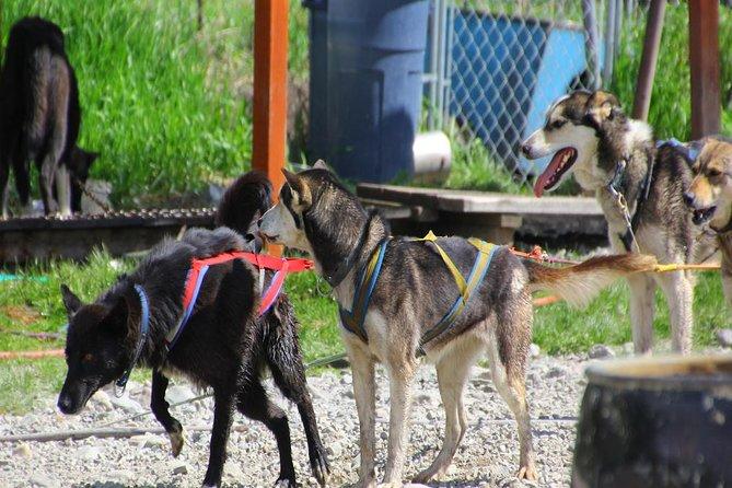 Skagway Shore Excursion: Yukon Dog Sledding and Sightseeing Tour