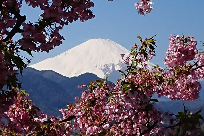 Cherry Blossom Festival & Gotemba Premium Outlet from February to April
