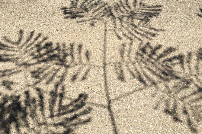 Botanical Tour of Cairo