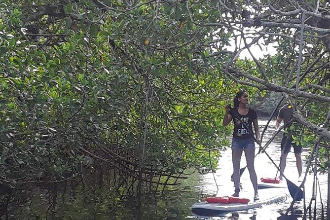 Naples Fl, Paddleboard Mangrove Forest Tour