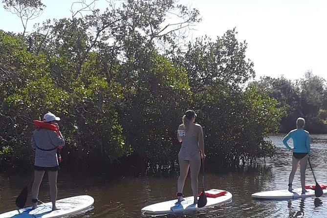 Naples Paddleboard Mangrove forest tours , Naples Paddleboard inc,