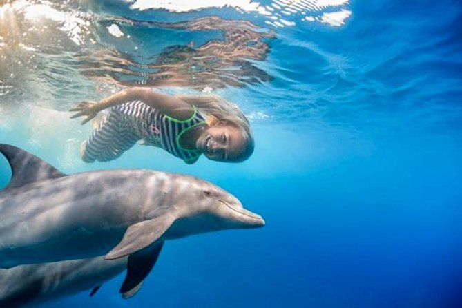 4 Hours Snorkeling With the Dolphins by a Speed Boat (Private) - Hurghada photo 28