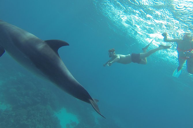 4 Hours Snorkeling With the Dolphins by a Speed Boat (Private) - Hurghada photo 29