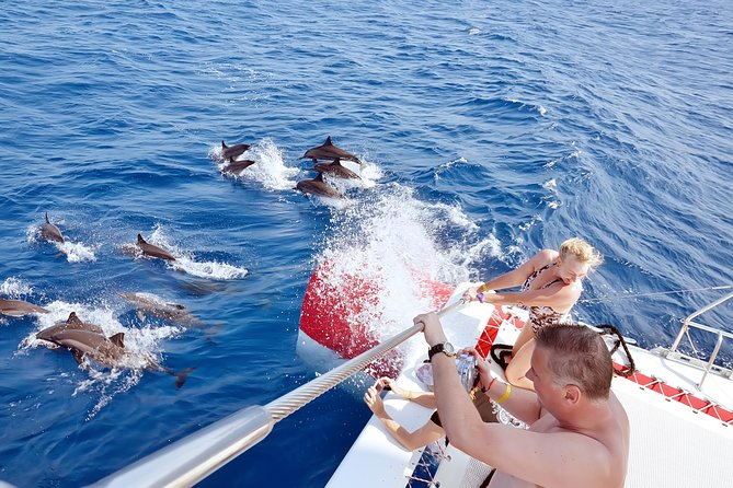 Special Dolphin House VIP snorkeling Sea Trip - Hurghada photo 26