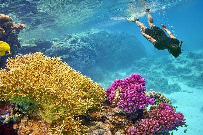Private Boat Snorkeling Sea Trip - Hurghada